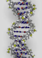 La double hélice d'ADN